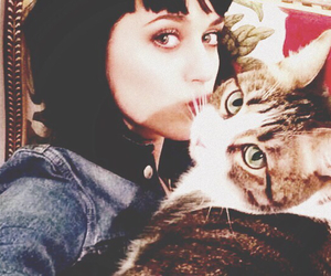 cat and katy perry image