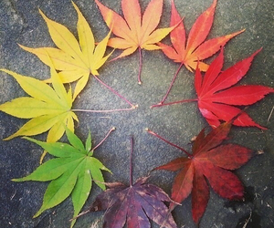 leaves, autumn, and colors image