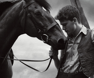 horse, black and white, and war horse image