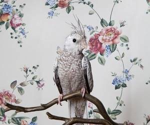 flowers, animal, and parrot image