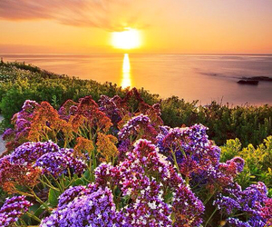 flowers, sea, and sunset image