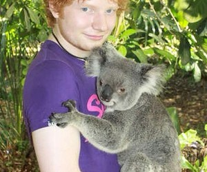 cuties, hug, and Koala image