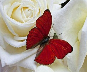 butterfly and beautiful image