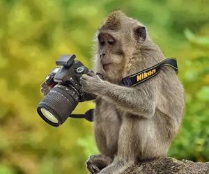 monkey, animal, and nikon image