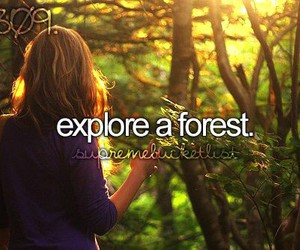 explore, forest, and bucket list image
