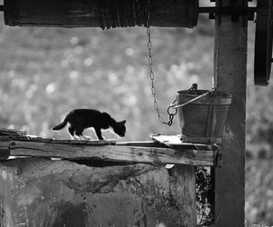 black & white, cat, and photography image