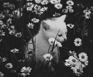 animal, black&white, and cat image