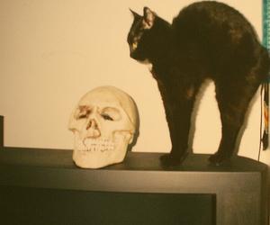 cat, skull, and black cat image