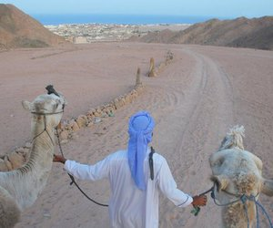 camel and desert image