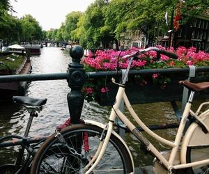 flowers, bike, and city image