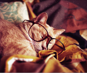 cat, eyeglasses, and photography image