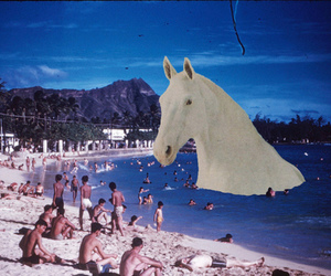 beach, horse, and grunge image