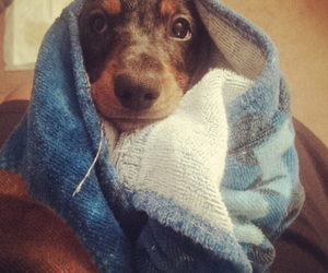 adorable, bath, and cute animals image