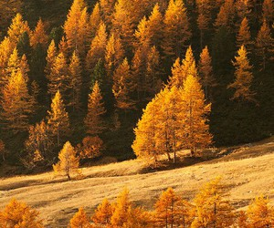 autumn, forest, and gold image
