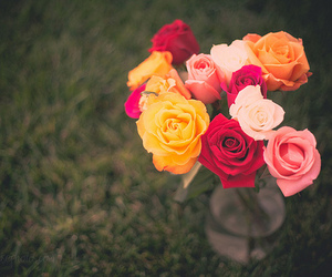 beautiful, photography, and roses image