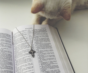 art, bible, and cat image