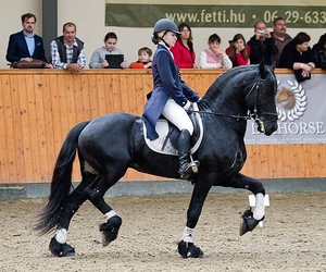 dressage, equestrian, and horse image