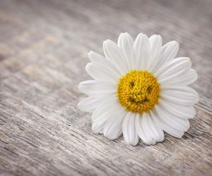 daisy, flowers, and heart image