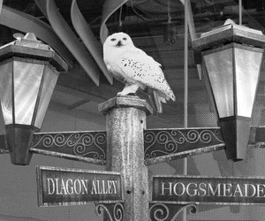 harry potter, owl, and hogwarts image