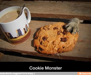 awesome, cat, and cookie monster image