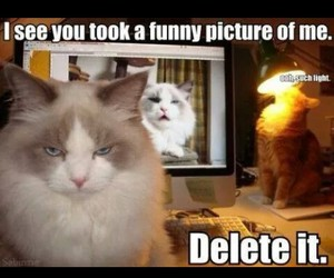 cat, funny, and hilarious image