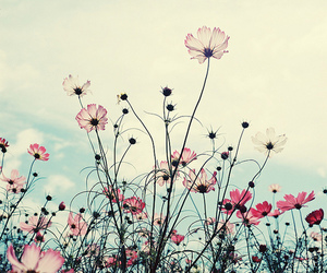 flores, flowers, and tumblr image
