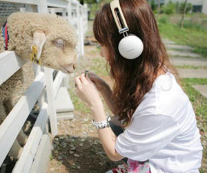 kawaii, ovelha, and fotos fofas image