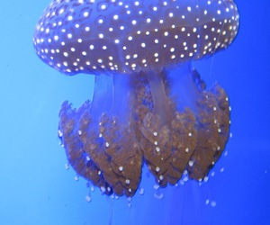 jelly, jelly fish, and ocean image