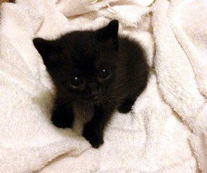 black, cat, and kitten image