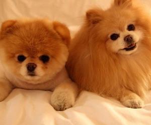 dog and boo image