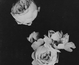 black and white, dark, and vintage image