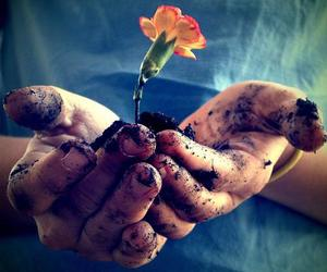 flowers, hands, and life image