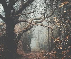 autumn, wild, and beautiful image