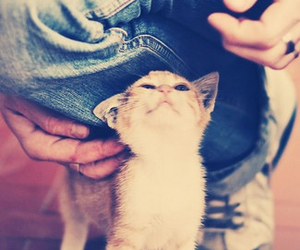 adorable, cat, and pets image