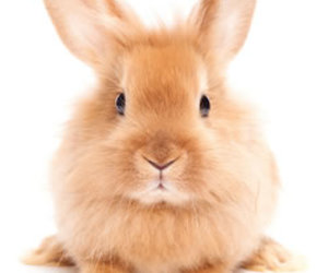 cute animals and rabbit image