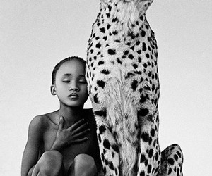 animal, photography, and cheetah image