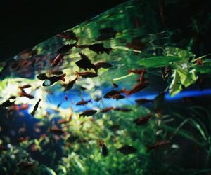 35mm camera, adventure, and aquarium image