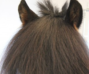 ears, horse, and hair image