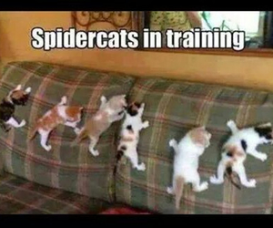 cat, funny, and training image
