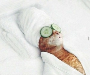 beuty, massage, and cat image