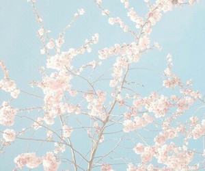 background, flowers, and tree image