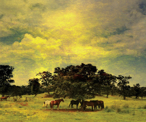 cloud, horse, and horses image