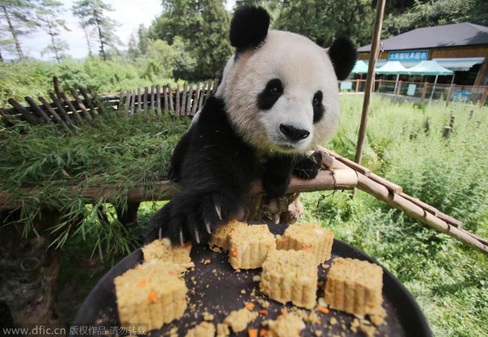 大熊猫吃月饼 image