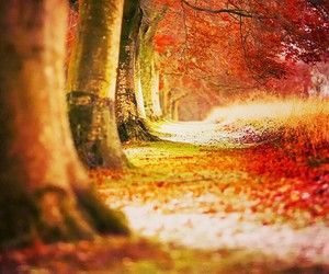 autumn, happy, and landscape image
