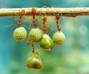 ant, green, and insect image