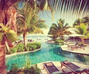 summer, paradise, and palms image