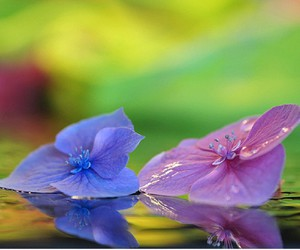 color, happiness, and nature image