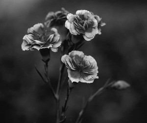 black and white, flowers, and dark image
