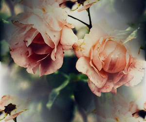 beautiful, flowers, and wallpapers image
