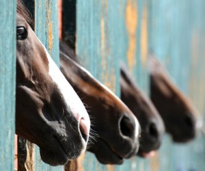 horse, animal, and nose image